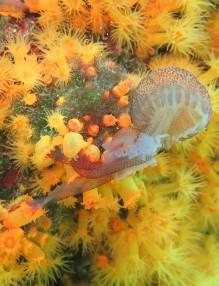 корали и медузи